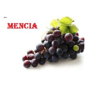 Mencia